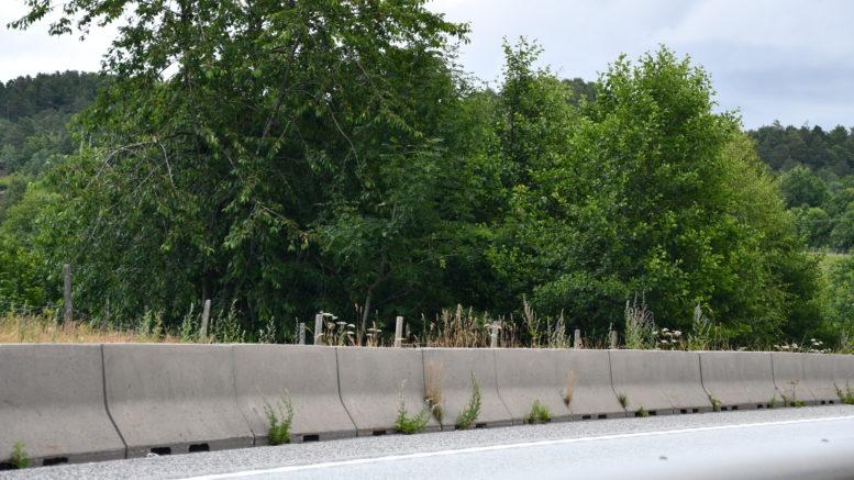 ÅRSAK: Mye tyder på at det er her veifarende tror de ser sauer langs veien. Men, de er bak ett gjerde.
